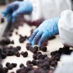 Food Industrie_klein-1